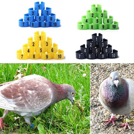 Micelec 100Pcs Bird Poultry Parrot Chicks Plastic 1-100 Numbered Pigeon Leg  Bands Rings