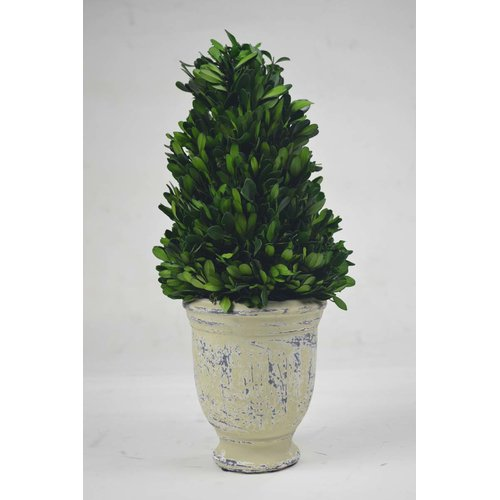 GT DIRECT CORP Cone Boxwood Topiary in Pot