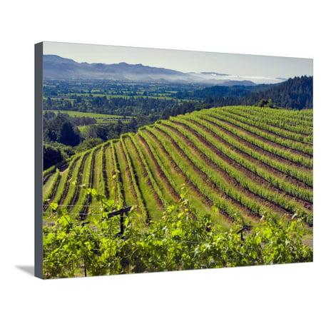 Newton Vineyard, Napa Valley, California, Usa Stretched Canvas Print ...