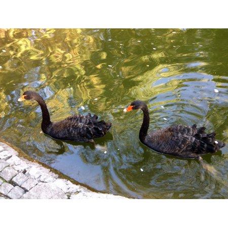 - Framed Art For Your Wall Green Swan Goose White Duck Turkey Ankara 10x13 Frame