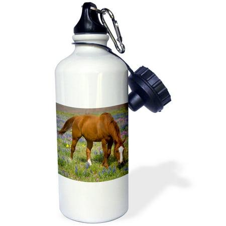 3dRose Quarter Horse in field of wildflowers Devine Texas - US44 DGU0114 - Darrell Gulin, Sports Water Bottle, (Texas Longhorns Bottle)