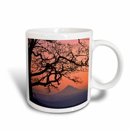3dRose USA, Oregon, Columbia River Gorge. Mt Hood framed by oak tree. , Ceramic Mug, 15-ounce