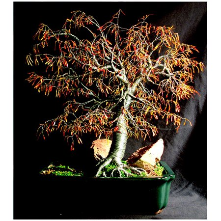 LAMINATED POSTER Tree Nature Art Sal Work Bonsai Sculpture Wire Poster Print 24 x 36
