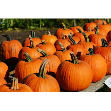 LAMINATED POSTER Autumn Halloween Pumpkin Gourd October Orange Poster Print 24 x 36