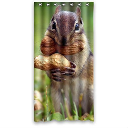 GreenDecor Squirrels Take The Peanut Waterproof Shower Curtain Set With Hooks Bathroom Accessories Size 36x72 Inches
