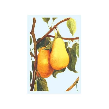 Bartlett Pears Print (Unframed Paper Print -