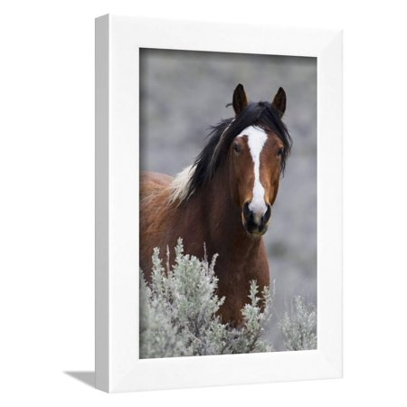 Wild Horses, Steens Mountains Photography Framed Print Wall Art By Ken Archer