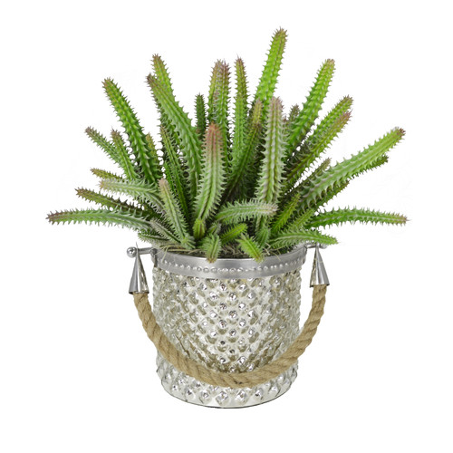 Creative Displays, Inc. Euphorbia Cactus in Mercury Glass Pail