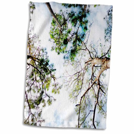3dRose View looking through slash pine trees sky florida scene 3d - Towel, 15 by 22-inch