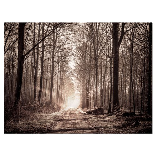 Design Art 'Forest Trail in Sepia' Photographic Print on Wrapped Canvas