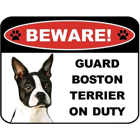 Beware Guard Boston Terrier on Duty (v1) 9 inch x 11.5 inch Laminated Dog - Boston Terrier Dog Pictures