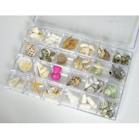 Sea Shells Bulk Assorted Variety Mix in Organizer Tray Box - 24 Varieties for Crafting Jewelry Making - Boxes In Bulk