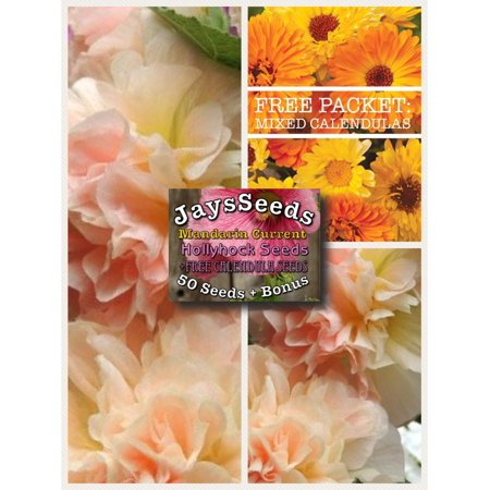 Mandarin Currant Hollyhock Seed Packet + Free Pack Mixed Calendula Free Flower Seeds