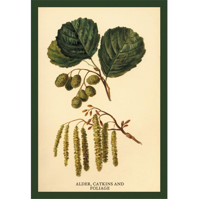 Buy Enlarge 0-587-17616-4P12x18 Alder  Catkins and Foliage- Paper Size P12x18