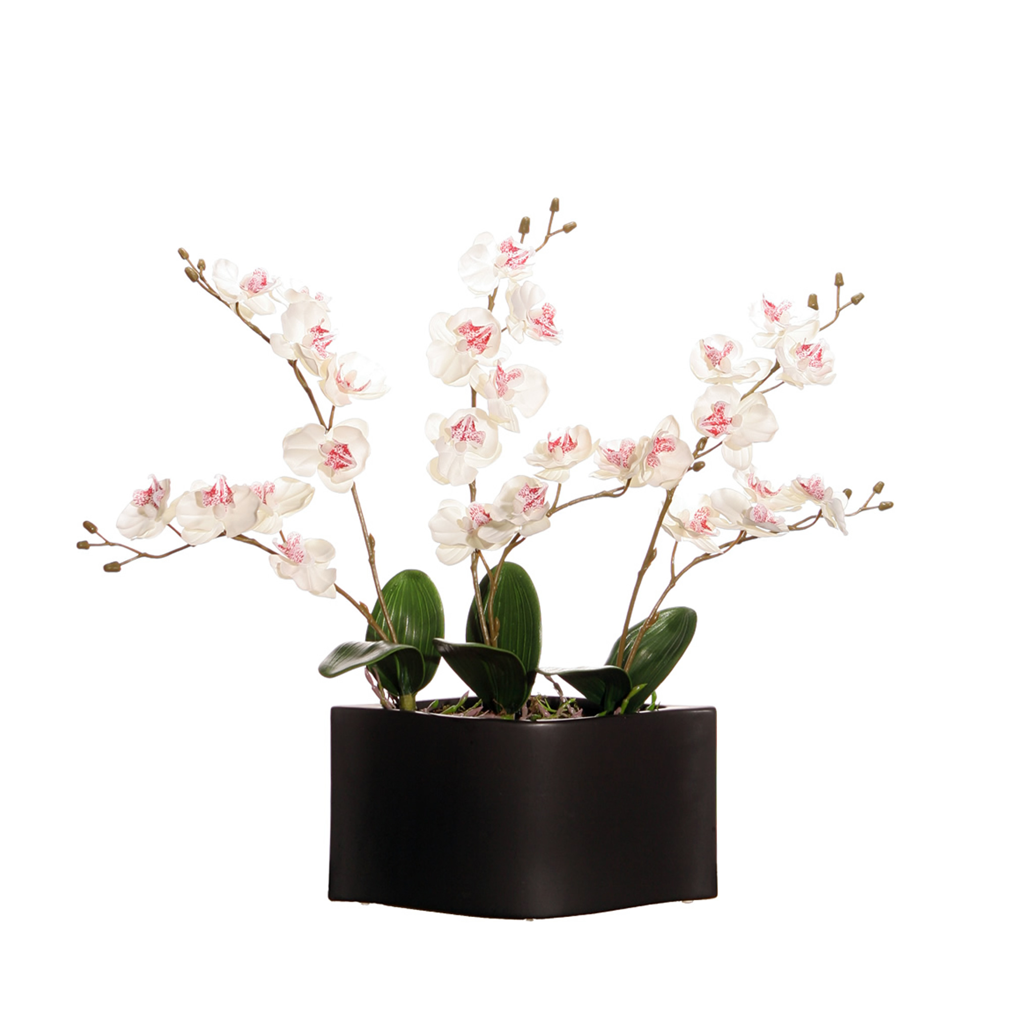 Vickerman White Orchids in Black