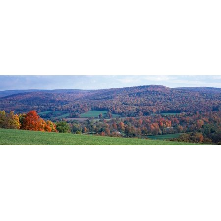 Trees On A Hill Adams Berkshire County Massachusetts Usa Poster Print