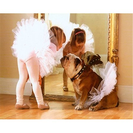 Reluctant Dancer 16X20 Art Print Poster Ballerina Dog Dance Ballet Mirror Cute Bulldog