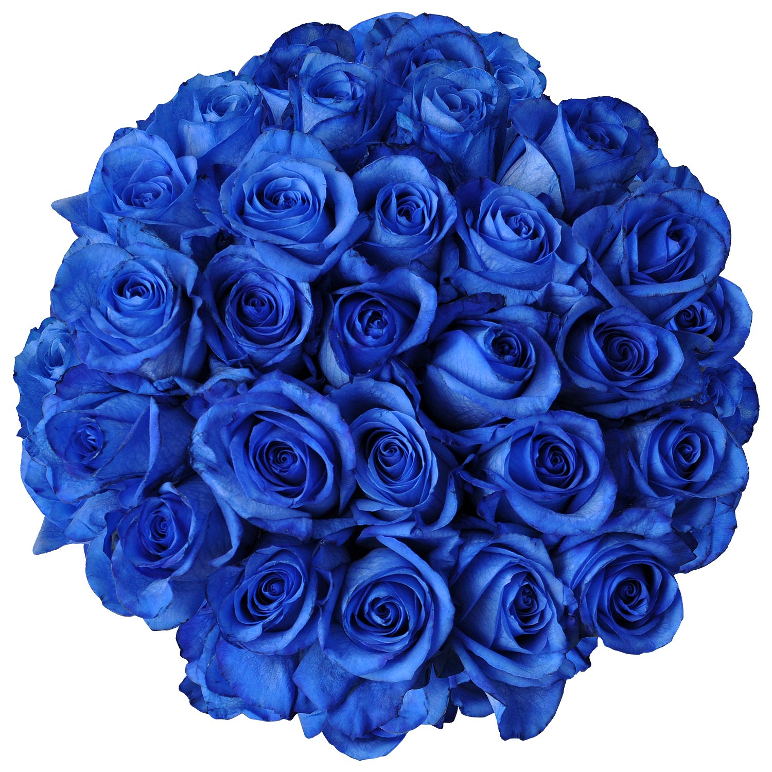 Natural Fresh Flowers - Tinted Blue Roses, 20\