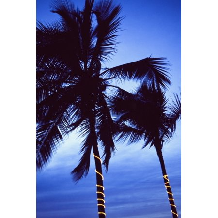 Palm Trees Decorated With Christmas Lights Canvas Art Ellen Rooney