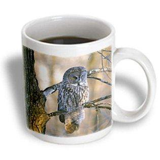 Gray Ceramic - 3dRose Canada, Quebec. Great gray owl on tree limb, sunset-CN10 BJA0018 - Janyes Gallery, Ceramic Mug, 11-ounce