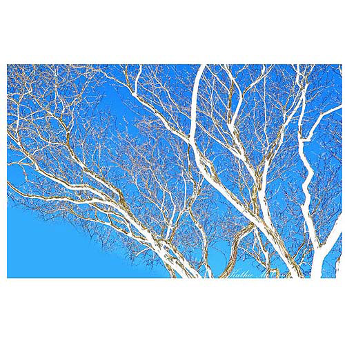 "Trademark Art ""Spring Tree"" Canvas Art by Kathie McCurdy, 30x47"