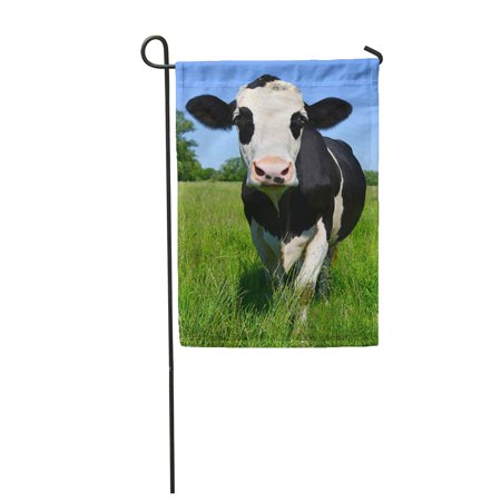 LADDKE Dairy Cow on Summer Pasture Agriculture Beast Beef Bevy Bloodstock Breeding Garden Flag Decorative Flag House Banner 28x40 inch ()