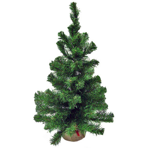Xmas Tree Balsam Pine 24 Inches Times 61 Tips Burlap Base