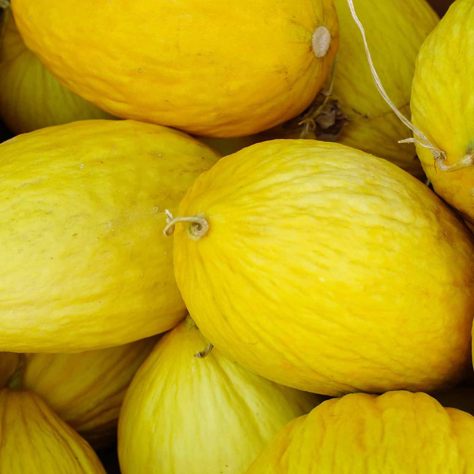 Crenshaw Melon Garden Seeds - 1 Oz - Non-GMO, Heirloom Vegetable Gardening Seeds - Fruit