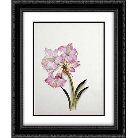 Belladonna Two Light - Amaryllis Belladonna 2x Matted 20x24 Black Ornate Framed Art Print by Dixie, Ethel May