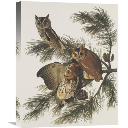 Global Gallery 'Little Screech Owl or Mottled Owl' by John James Audubon Painting Print on Wrapped Canvas