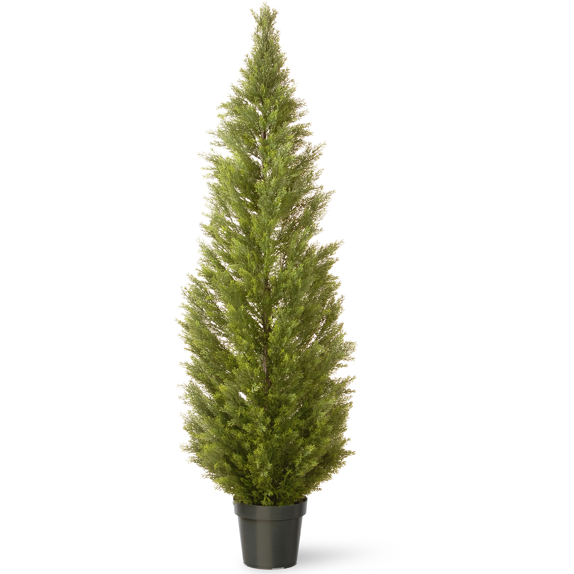 """National Tree 72"""" Arborvitae with Green Pot"""
