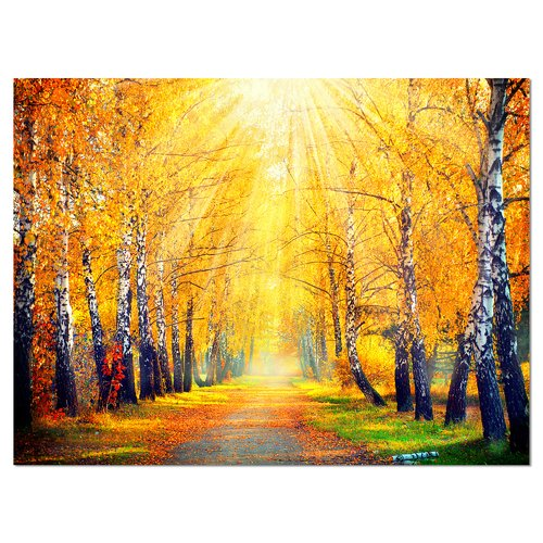 Design Art 'Yellow Autumn Trees in Sunray' Photographic Print on Wrapped Canvas