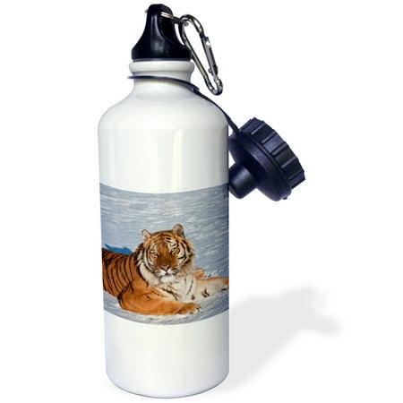 3dRose Siberian Tiger lying in the snow, Sports Water Bottle, 21oz (Snow Bottle)