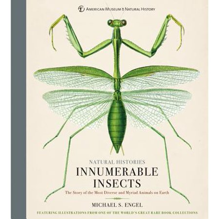 Innumerable Insects : The Story of the Most Diverse and Myriad Animals on Earth - Insect Animals
