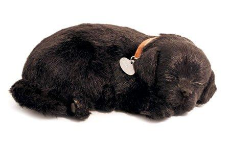 Perfect Petzzz XP91-22 Black Lab Adorable Pets