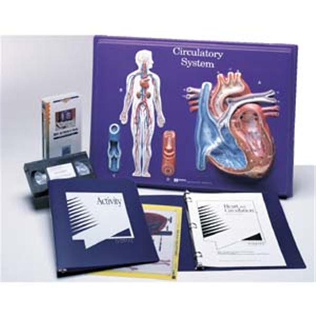 Hubbard Scientific 2671 Circulatory System Model Activity Set