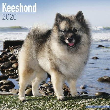 Keeshond Calendar 2020 - Keeshond Dog Breed Calendar ...