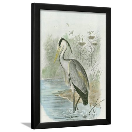 Common Heron Framed Print Wall