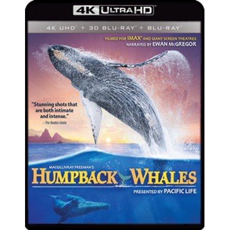 IMAX: Humpback Whales (4K Ultra HD)
