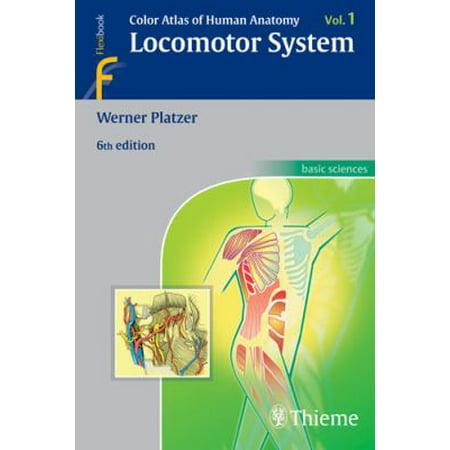 Color Atlas Of Human Anatomy Volume 1 Locomotor System Walmart
