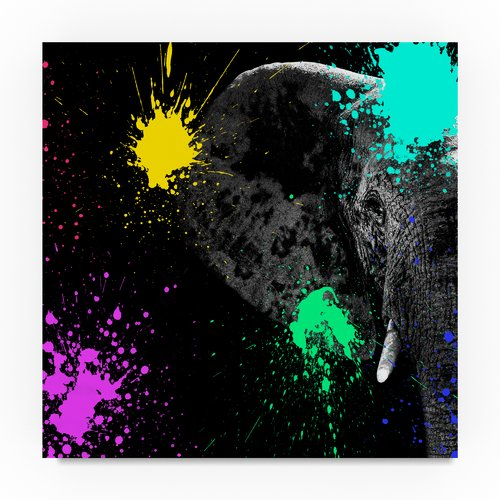 Trademark Fine Art 'Elephant Portrait II' Print on Wrapped Canvas