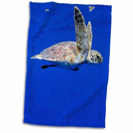 3dRose Hawaii, Big Island, Green Sea Turtle - US12 PSO0049 - Paul Souders - Towel, 15 by 22-inch - Paul Frank Towel