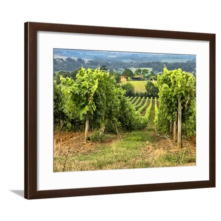 Pastoral Countryside XIX Framed Print Wall Art By Colby Chester ()