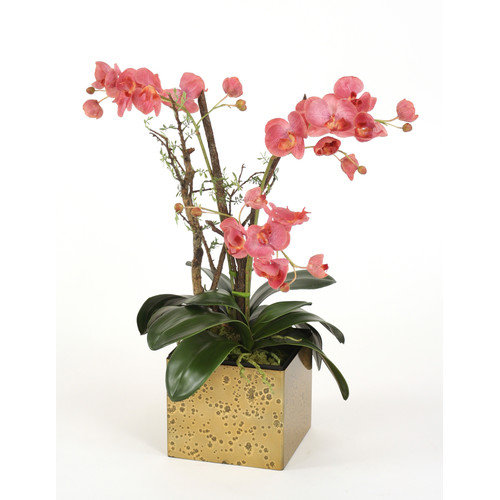 Distinctive Designs Silk Fuchsia Orchid with Bonsai Limbs and Dragonwood in Golden Tortoise Box