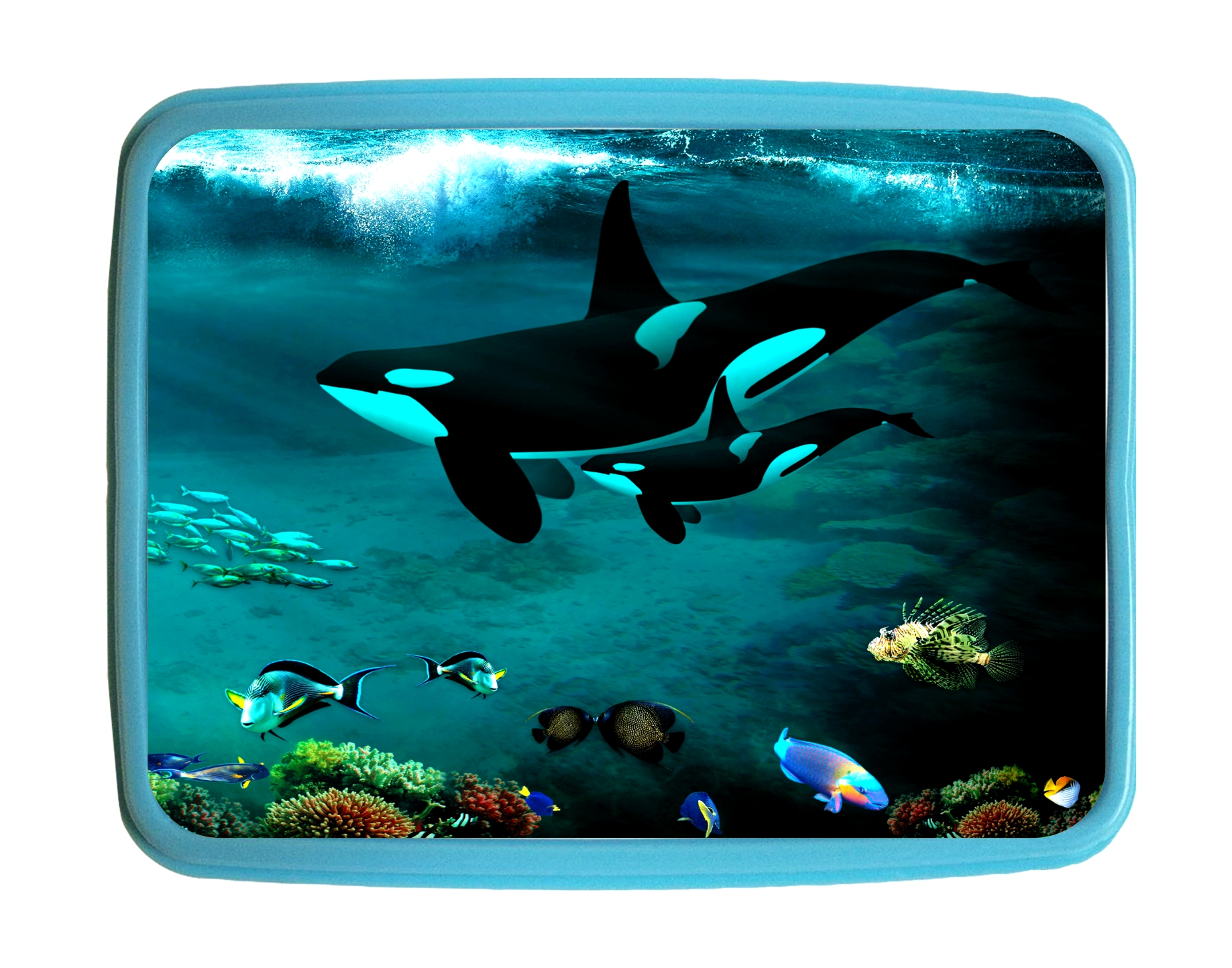Lunchbox Pets Orca Whales Undersea Kids Bento Lunch Box With 3 Compartment Food Container Walmart Com Walmart Com