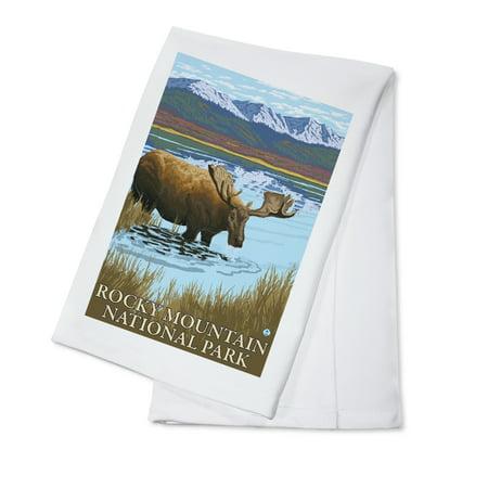Rocky Mountain National Park  Colorado   Moose Drinking   Lantern Press Artwork  100  Cotton Kitchen Towel