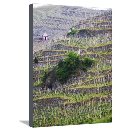 Vineyards in the Cote Rotie District, Ampuis, Rhone, France Stretched Canvas Print Wall Art By Per Karlsson