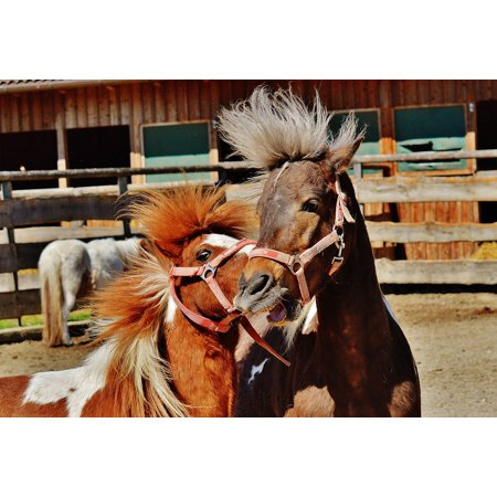 LAMINATED POSTER Horses Cute Animal Seahorses Nature Funny Play Poster Print 24 x 36 - Seahorse Funny