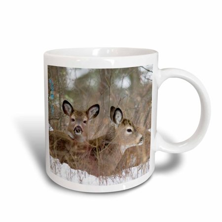 3dRose Mule deer resting in cover in Whitefish Montana - US27 CHA1240 - Chuck Haney, Ceramic Mug, 11-ounce