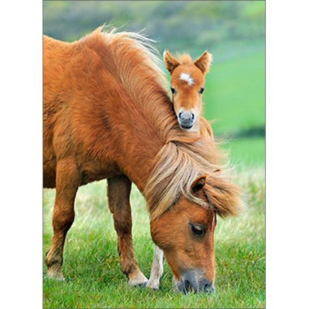 - Avanti Press Mother And Colt Horse Blank Note Card